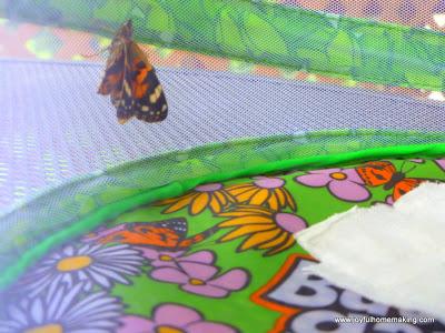 Little Girl's Butterfly Cake, Joyful Homemaking
