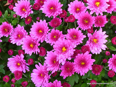 , Menu Plan for the Week of October 28th, Joyful Homemaking