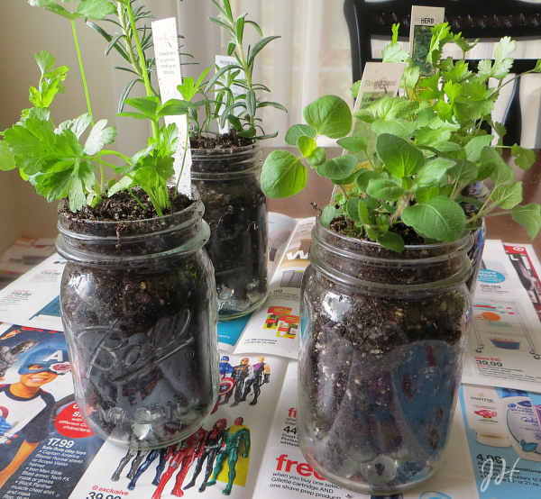 mason jar herb garden, Kitchen Herb Garden in Mason Jars, Joyful Homemaking